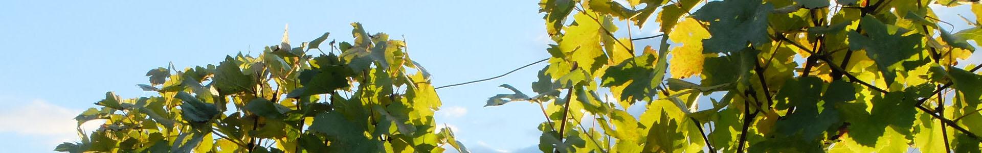 Weinbauverein Suttenberg
